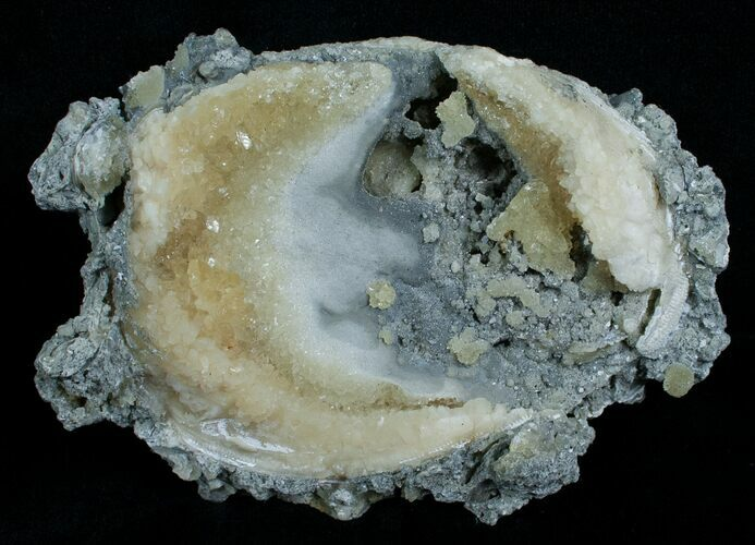 Calcite Crystal Filled Clam Fossil