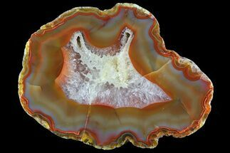 "3.4"" Beautiful Condor Agate From Argentina - Cut/Polished Face For Sale, #79514"
