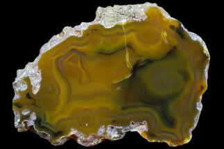 "Buy 3.3"" Beautiful Condor Agate From Argentina - Slab - #79486"