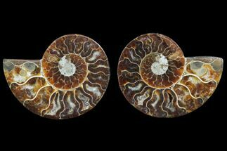 "3.3"" Cut & Polished Ammonite Pair - Agatized For Sale, #78395"