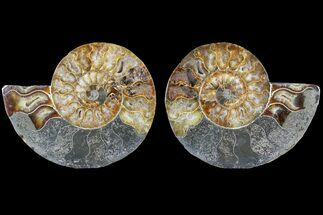 "5.7"" Cut & Polished Ammonite Fossil - Agatized For Sale, #79712"
