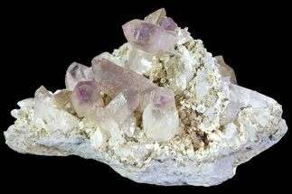 "2.6"" Amethyst Cluster - Las Vigas, Mexico  For Sale, #80546"