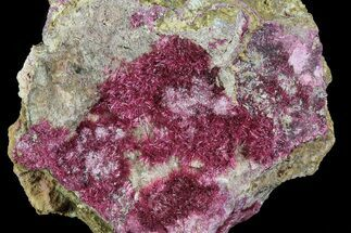 Roselite & Pyrite - Fossils For Sale - #80538