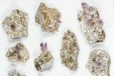 "Wholesale Lot: 2-3.5"" Vera Cruz Amethyst Clusters - 15 Pieces - #80635-2"