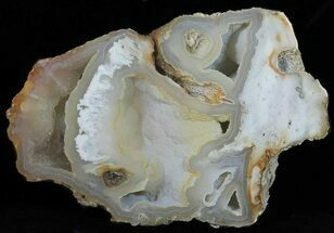 "13.3"" Agatized Fossil Coral With Druzy Quartz - Florida For Sale, #50793"