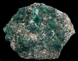 "4.9"" Rogerley Fluorite & Galena - England (Reduced Price) For Sale, #32396"