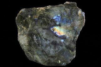 Labradorite - Fossils For Sale - #81399