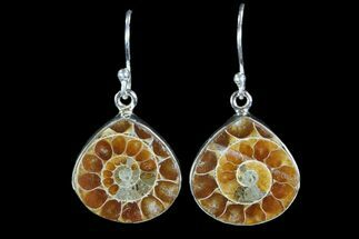 Fossil Ammonite Earrings - Sterling Silver For Sale, #81614