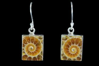 Fossil Ammonite Earrings - Sterling Silver For Sale, #81620