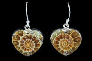 Buy Fossil Ammonite Earrings - Sterling Silver - #81631