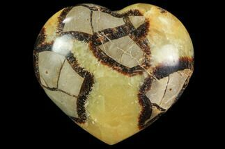 Septarian - Fossils For Sale - #82023