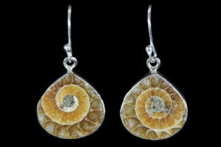Fossil Ammonite Earrings - Sterling Silver For Sale, #82250