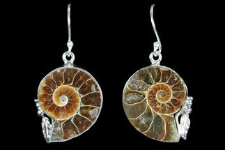 Fossil Ammonite Earrings - Sterling Silver For Sale, #82256
