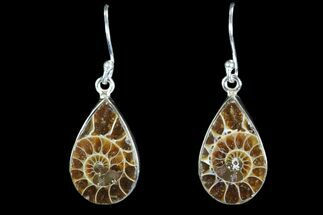 Fossil Ammonite Earrings - Sterling Silver For Sale, #82262