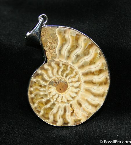 Large Ammonite Pendant - 1.7 Inches Wide