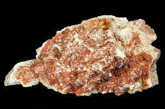 "Buy 7.6"" Ruby Red Vanadinite Crystals on Pink Barite - Morocco - #82372"