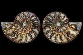 "3.8"" Cut & Polished Ammonite Pair - Agatized For Sale, #82277"