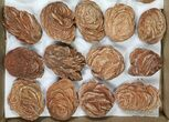 "Wholesale Flat: Desert Roses From Morocco (1.5 to 3"") - 32 Pieces - #82746-2"