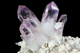 "2.3"" Amethyst Cluster - Las Vigas, Mexico  For Sale, #84392"
