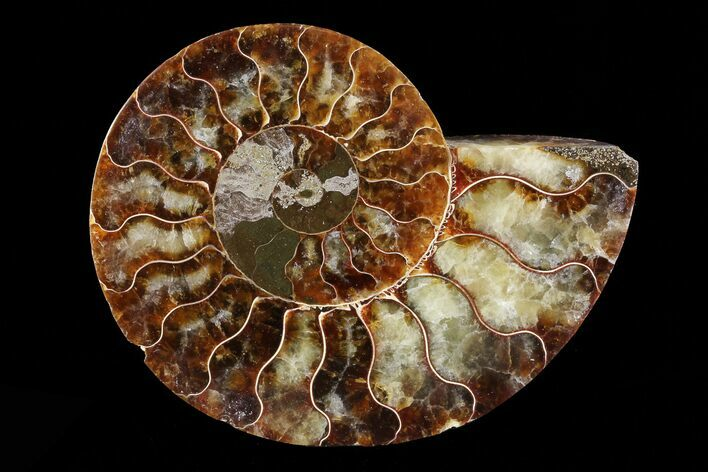 "3.9"" Agatized Ammonite Fossil (Half) - Madagascar"
