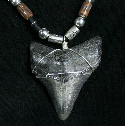 "Megalodon Tooth Necklace - 2.1"" tooth"