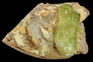 "Buy Lustrous, .8"" Yellow Apatite Crystal on Calcite - Morocco - #84322"
