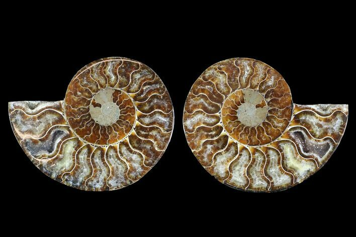 "4.25"" Cut & Polished Ammonite Fossil - Crystal Chambers"