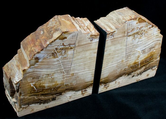 Small Sequoia Petrified Wood Bookends - Oregon