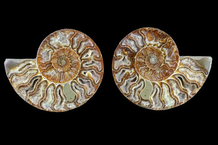 "4.55"" Cut & Polished Ammonite Fossil - Crystal Chambers"