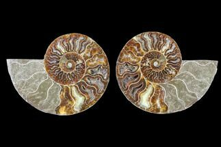 "4.25"" Cut & Polished Ammonite Fossil - Agatized For Sale, #88226"