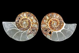 "3.5"" Cut & Polished Ammonite (Anapuzosia?) Pair - Madagascar For Sale, #88007"