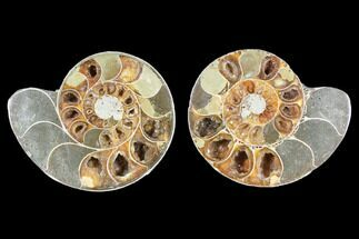 "3.9"" Cut & Polished Ammonite (Anapuzosia?) Pair - Madagascar For Sale, #88010"