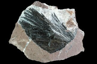 Pyrolusite - Fossils For Sale - #88947