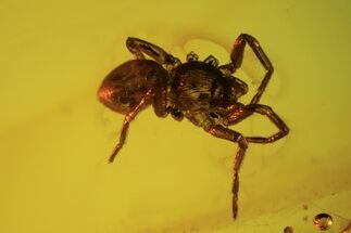 Fossil Spider (Aranea) In Baltic Amber For Sale, #90872