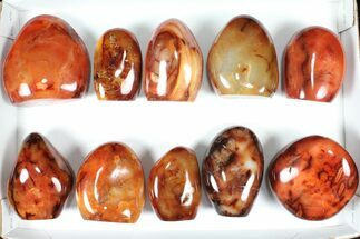 "Buy Wholesale Lot: 3-4"" Cut Base Polished Carnelian - 10 pieces - #91534"