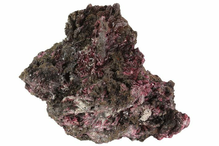 "3.3"" Magenta Erythrite Crystals on Matrix - Morocco"