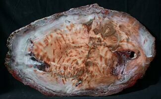 "Buy Brilliant Red Petrified Wood Tabletop - 34 x 21"" - #93250"