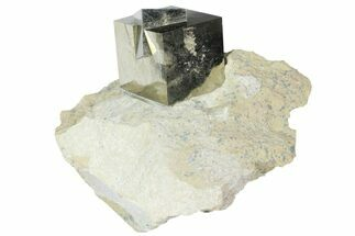 Pyrite - Fossils For Sale - #94335