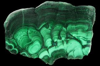 "Buy 4.4"" Polished Malachite Slab - Congo - #94492"
