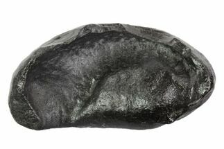 Whale (Unknown Species) - Fossils For Sale - #95745