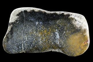 "10.4"" Polished Slab of Petrified Palmwood - Nephi, Utah For Sale, #96071"