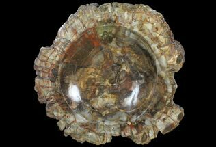 "9.1"" Polished Madagascar Petrified Wood Dish - Madagascar For Sale, #98288"