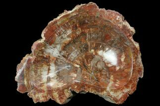 "Buy 8.6"" Polished Madagascar Petrified Wood Dish - Madagascar - #98290"