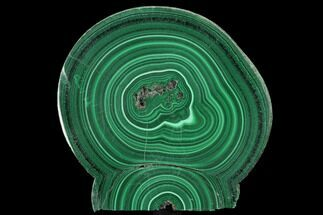 "Buy Bargain, 2.2"" Polished Malachite Stalactite Slice - Congo - #99499"