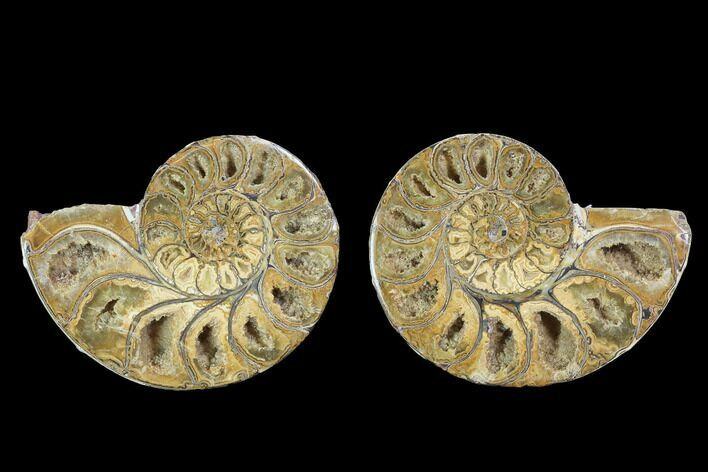 "3.5"" Cut & Polished, Agatized Ammonite Fossil - Jurassic"