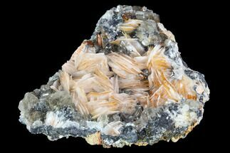 "2.7"" Cerussite Crystals with Bladed Barite on Galena - Morocco For Sale, #100778"