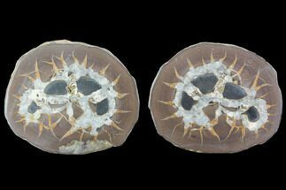 "Buy 3.1"" Cut/Polished Septarian Nodule Pair - Morocco - #101212"