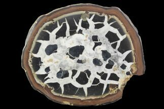 "3.1"" Cut/Polished Septarian Nodule Half - Morocco For Sale, #101312"