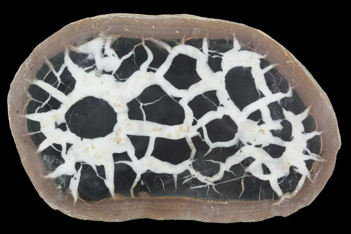 "4"" Cut/Polished Septarian Nodule Half - Morocco"