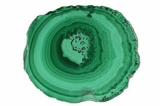 "Buy .94"" Polished Malachite Stalactite Slice - Congo - #101896"